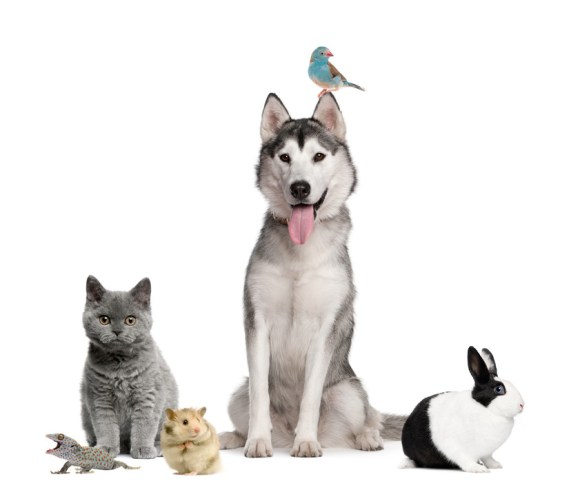 Online Pet Business For Sale | Pure-Ecommerce UK