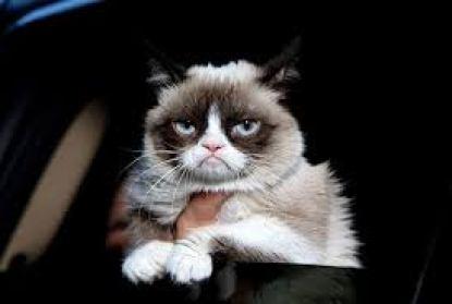 Grumpy le chat coqueluche du net