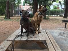 Roxy Austin picnic bench
