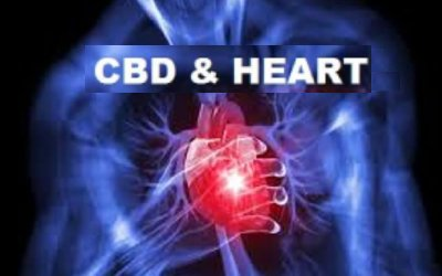 4 Effective Ways CBD Could Help Your Heart