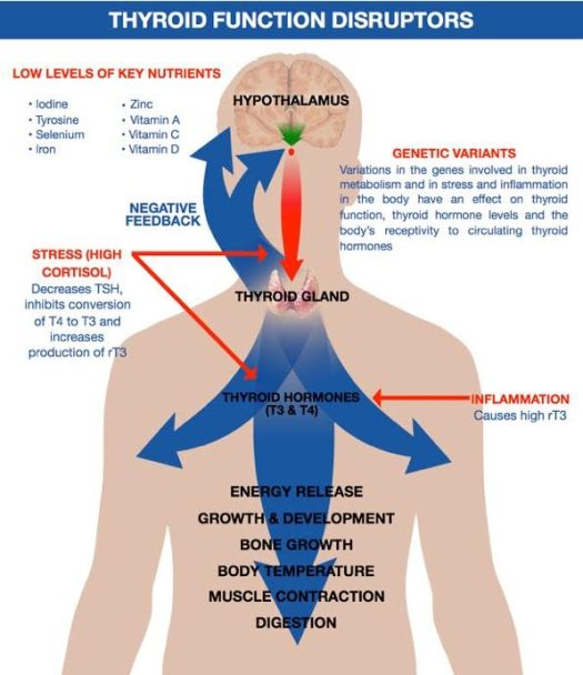 Thyroid disruptors