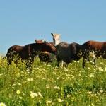 zelfmedicatie paarden in het wild gezondheid kruiden