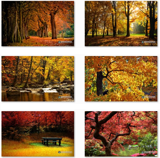 Download Autumn Themes For Windows O Pureinfotech