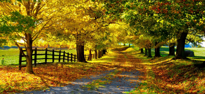 download autumn themes for windows download pureinfotech