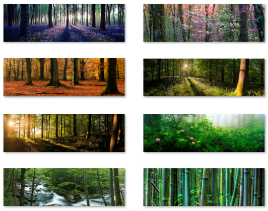 dual monitor wallpapers - forest