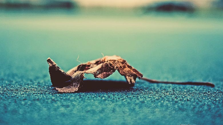 Light and Dark 2 Theme - Dead leaf on tennis court