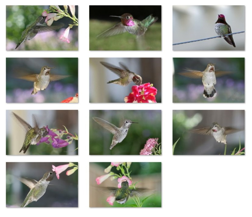 Hummingbirds wallpapers