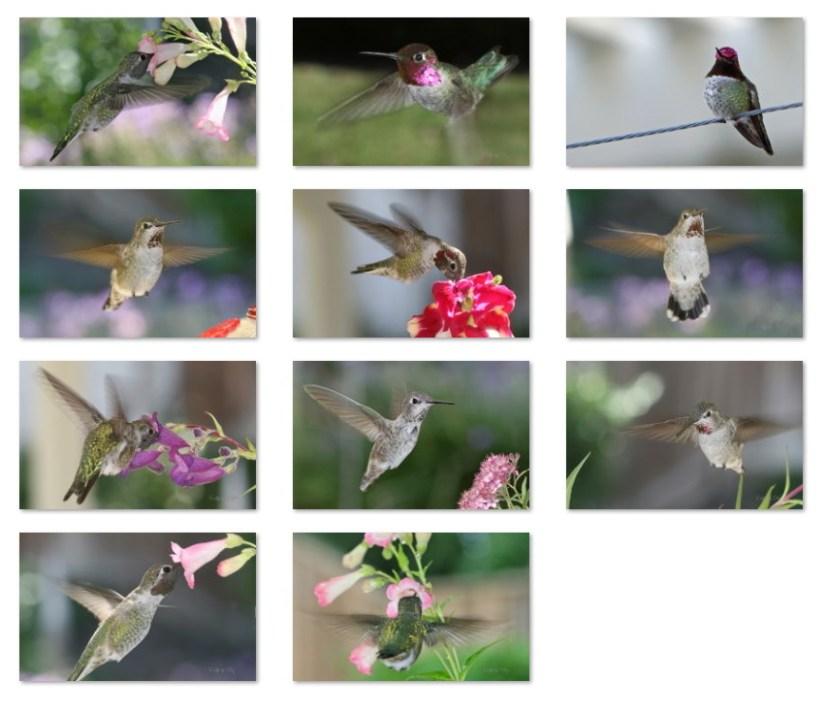 Hummingbirds wallpapers