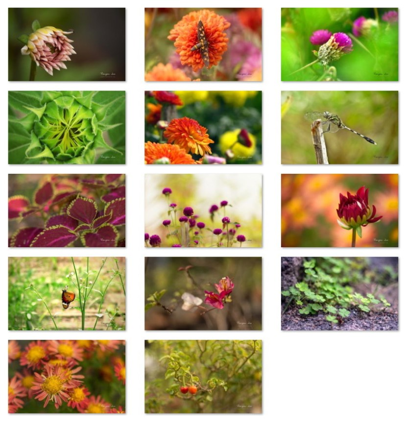 Garden Glimpses wallpapers for Windows