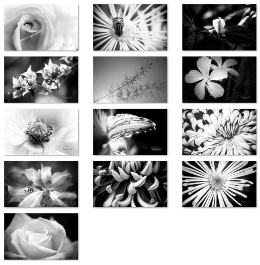 Flower geometric wallpapers