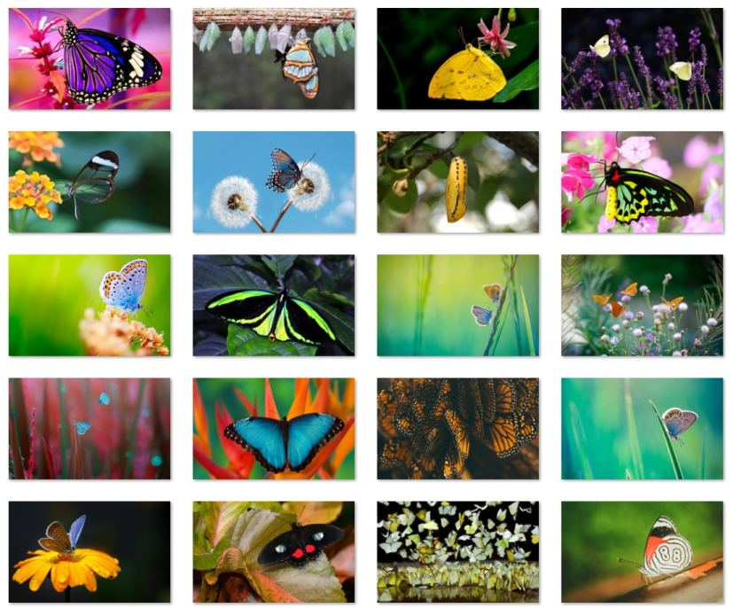 Butterfly wallpapers for Windows 10