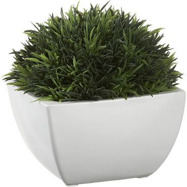 potted-moss