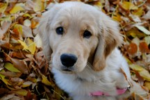 Puppy Prairie