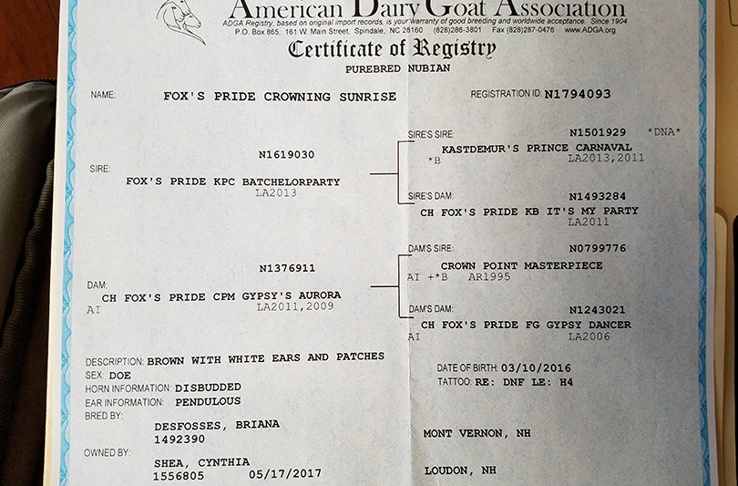 Goat registration papers