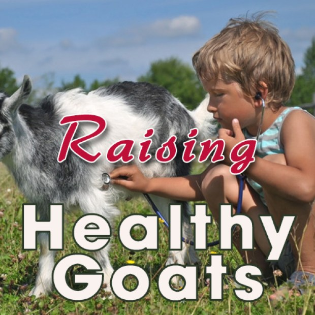 How to tell if your goat has worms and what to do about it.
