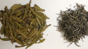 New Study Shows that Green Tea Among Foods that can Inhibit Reproduction of Coronavirus.