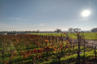 SonomaPuer Holiday Sale
