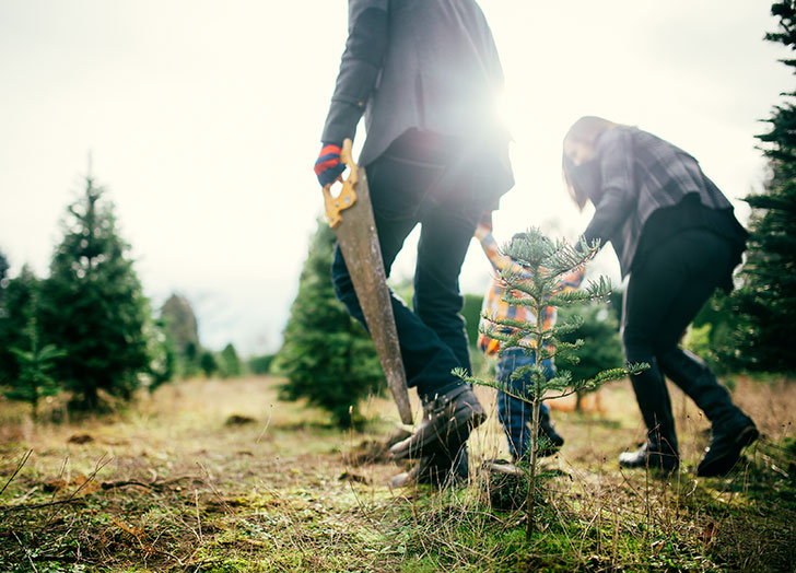 Family picking out a tree on Christmas tree farm