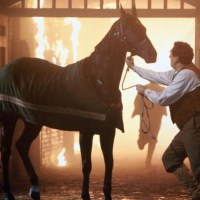 Black Beauty Movie Review