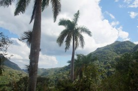puriy-reiseblog-trinidad-30