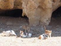 Zypern und Katzen