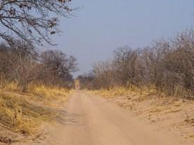 Weg nach Savuti