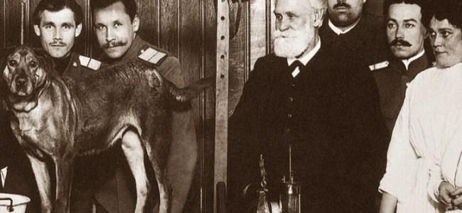Perro de Pavlov - experimento