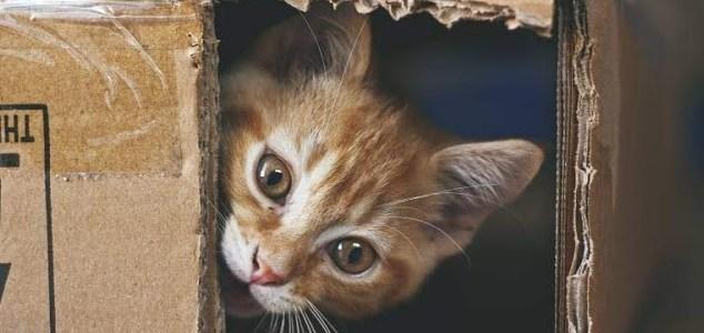 Gato de Schrödinger en una caja