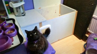 Fluffycat Naughty Norman being poseycat in front of the finished enclosure in his bedroom