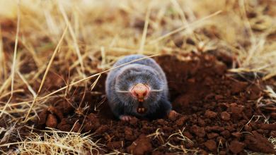 Photo of How To Deal With Moles In Your Home Garden