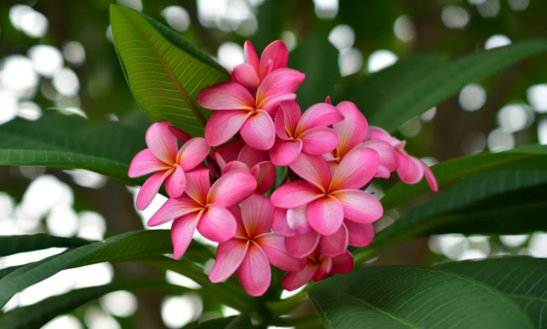 Photo of 9 Plants and Flowers that Evoke the Essence of Hawaii