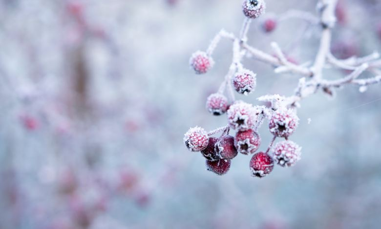 Photo of How to Prepare Your Garden for Winter