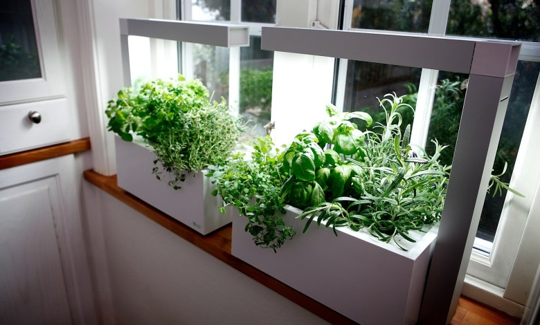 Photo of Indoor Hydroponics: A Trendy New Approach To Gardening