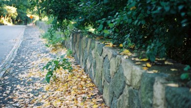 Photo of Inexpensive Retaining Wall Ideas for Your Garden