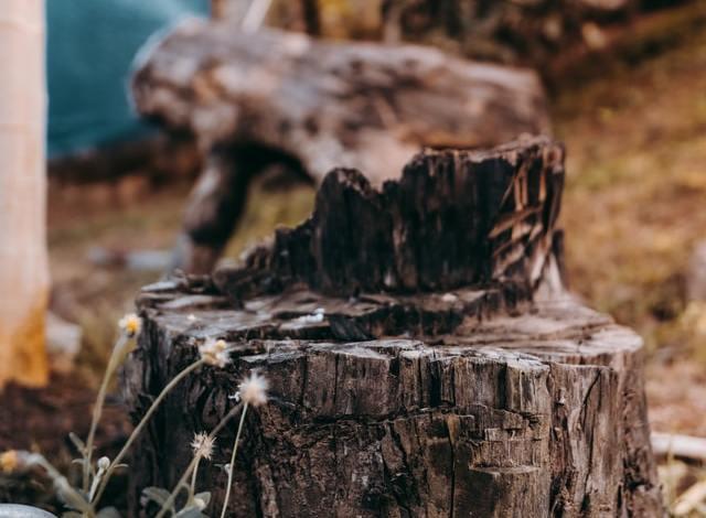 Photo of How to Kill a Tree Stump