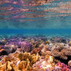 photo - coral in the red sea egypt