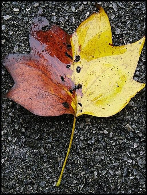 assym leaf