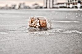 Beach jellyfish 3806 sm