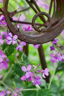 A circle of rust in spring flowers.
