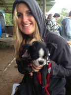 Found the cutest little Boston Terrier pup,. Made me miss my mutts at home so much.