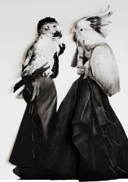 Collage of a vintage fashion shot of two women with a parrot head.