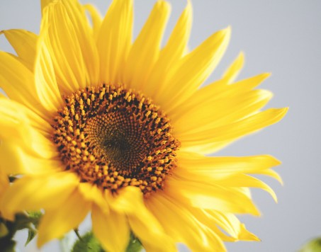 Dietary Fats: Sunflower - Purpose Driven Mastery