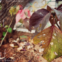The Last Dry Leaf.