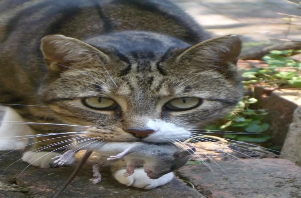 Cat Headbutting