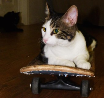 PURRboard