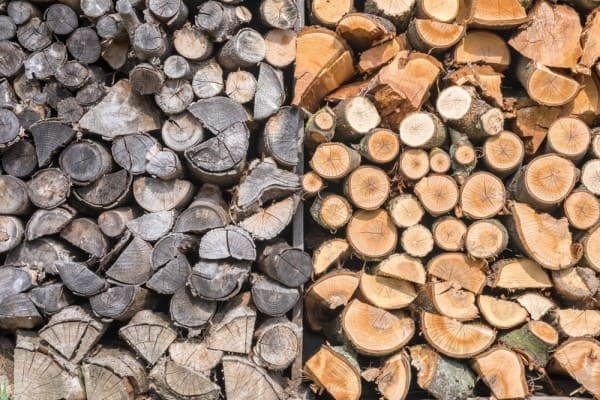 Green or Unseasoned Wood vs. Seasoned Wood
