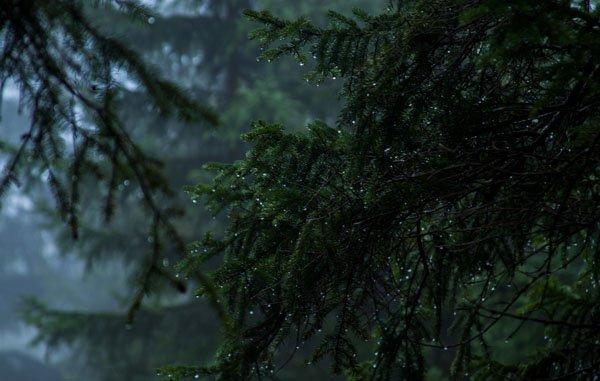 rain on forest tree