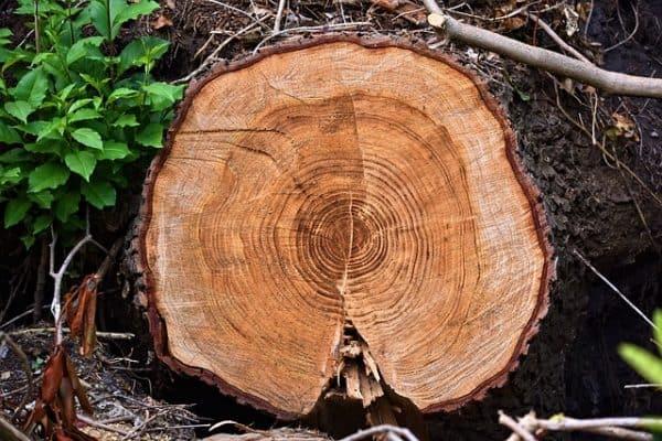 Freshly Chopped Wood