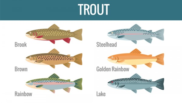 Different Breeds of Trout
