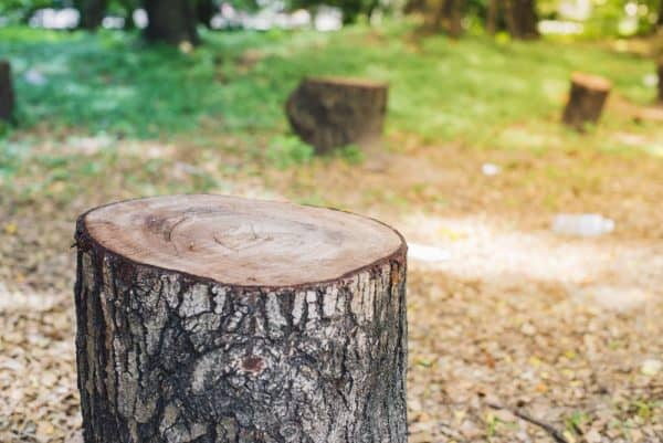 Tree Stump Inspection